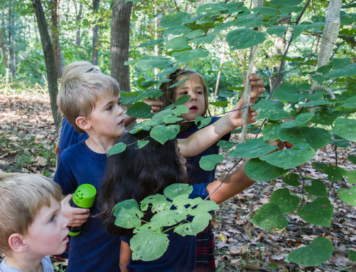 Sacred Heart Villa Chosen for Forest Park Project